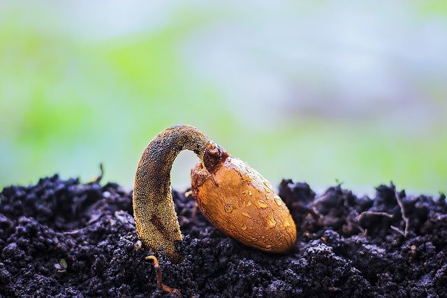 Quelques astuces pour réussir un semis
