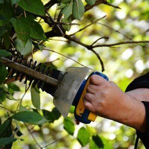 3 éléments indispensables pour réussir la taille d'un arbre